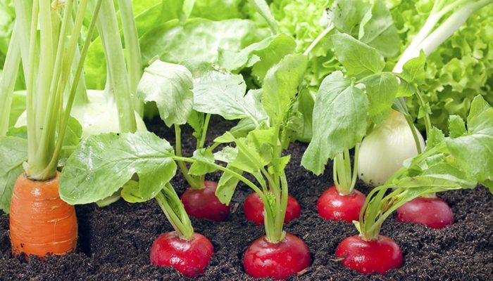 How to prepare your soil for a vegetable garden for Vegetable garden soil
