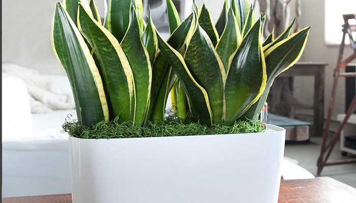 Rainbow tz blog - Ideal indoor plants ...