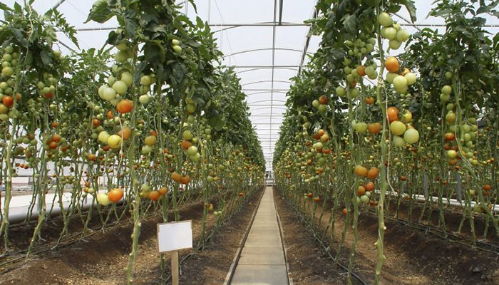 Greenhouses The Best Fruits And Vegetables To Grow