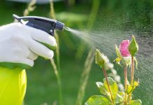 things your landscaper wont tell you