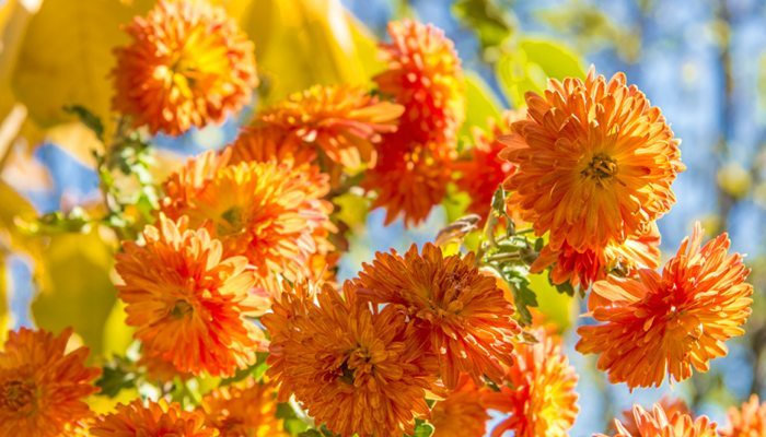 5 Fall Gardening Tips Landscapers Suggest