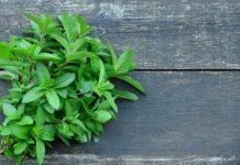 mosquito repellent herbs